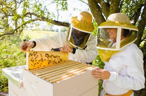 Cerco socio per aprire un allevamento di api