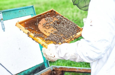 Cerco socio per aprire un' attività di apicoltura