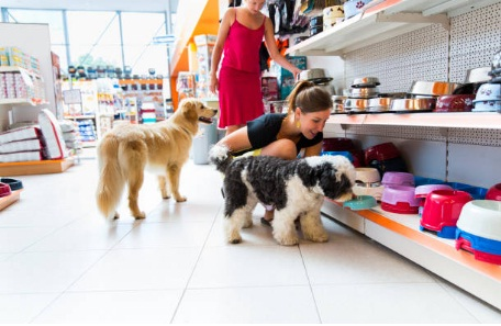 Cerco socio per aprire un negozio di animali